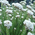 Beautiful fynbos